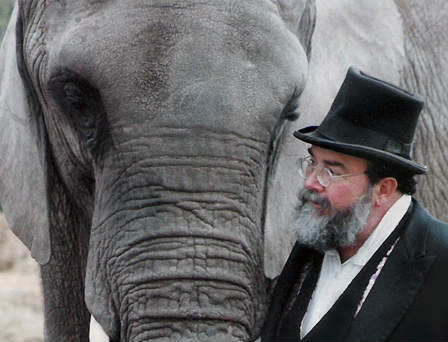 ONE-LUCKY-ELEPHANT-arrangem